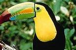 Belize City Tour and Belize Zoo, Belize City,