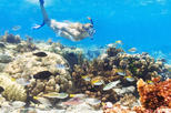 Caribbean - Dominican Republic: Catalina Island and Snorkeling Day Trip