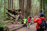 Sonoma Redwoods Hiking Tour
