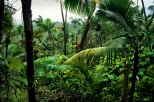 El Yunque Rainforest Half-Day Trip from San Juan, San Juan, Day Trips