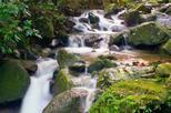 El Yunque Rainforest Half-Day Trip from San Juan, San Juan,