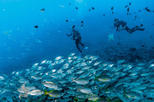 Scuba Diving for Licensed Divers in Arinaga