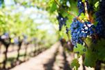Private Half-Day Napa Valley Wine Tour From San Francisco