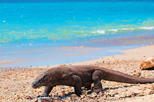 4 Days  3 Nights Komodo Cruise Adventure