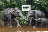 Singapore Night Safari Tour with Direct Transfer from Hotel or Port