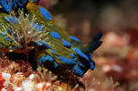 Private Full-Day Scuba Diving Charter to Goat Island Marine Reserve from Warkworth