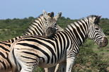 Hluhluwe safari guided day tour from durban in durban 430391