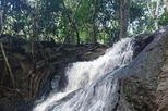 Half-Day Karura Forest Small-Group Tour from Nairobi with Optional Trail Bike