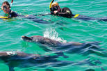 Swim with dolphins and round trip transportation