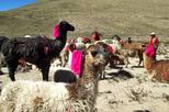 Colca Canyon 2 Days 1 Night with ending in Puno city