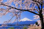 Cherry Blossom Tour with Visit to Odawara Castle, Lake Kawaguchi, and Pirate Ship Ride including Lunch Buffet