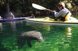 Manatee Kayak Tour at Blue Springs State Park