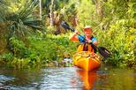 Wekiva River Kayak Tour