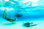 3 Hour Private Stingray City and Snorkeling Charter