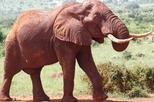 3days Best of Tsavo East & Tsavo West  Wildlife Safari From Mombasa