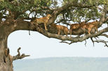 4Days Tanzania Northern Circuit Camping Safari