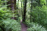 Portland s forest park hike and picnic in portland 410309