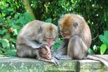 Private tour full day bali paradise tour with monkey forest including in kuta 415411
