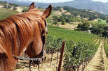 Private Wine Tour of Sonoma County, Scenic Zip Lining and Horseback Riding
