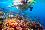 St Kitts Shore Excursion: Private Snorkeling Tour