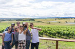 Yarra Valley Wine Tour - Wine Tasting Day Tour in a Spacious 8-Seat Van