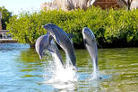 Dolphin Research Center and Florida Keys Tour