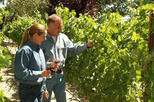 Private Pahrump Winery Tour from Las Vegas