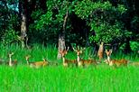 2 Night 3 days Chitwan National Park Tour