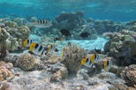 Bora Bora 4 hour Morning or Afternoon Snorkeling Cruise