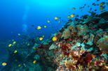 DISCOVER Scuba Dive: 2-Shallow Reef Dives from Waikiki