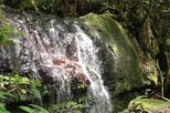 El Yunque Rainforest and Waterfall Adventure from San Juan