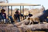 Private Game Drive and Chobe River Cruise