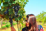 Vineyard Tour to Beautiful Nandi Hills including Wine Tasting and Private Transfer