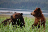 Exclusive Pack Creek Bear Viewing from Juneau