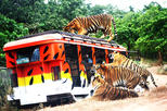 Zoobic Safari Entry with Lunch Option