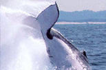 Half-Day Whale Watching and Canal Cruise from the Gold Coast, Gold Coast, Dolphin & Whale Watching