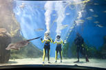 Shark Walking Experience at Melbourne Aquarium