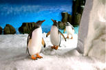 Skip the Line: Melbourne Aquarium Tickets, Melbourne, Attraction Tickets