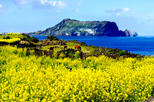 All-Inclusive Small Group Full Day Tour of Jeju Island