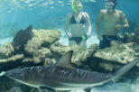 Swimming with Sharks at Coral World Ocean Park