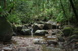 St Kitts Half-Day Rainforest Tour, St Kitts,