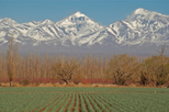 Mendoza City Tour, Mendoza, Half-day Tours