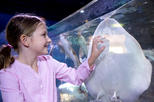USA - Arizona: SEA LIFE Aquarium Arizona Admission Ticket