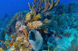 Key West Shore Excursion: Reef Express Snorkeling Tour, Key West, Ports of Call Tours