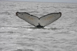 Whale Watching & Wildlife Eco Tour from San Francisco, San Francisco, Dolphin & Whale Watching