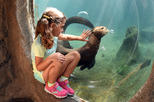 Zoo Miami General Admission with Optional Monorail and Animal Feeding Upgrade