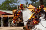Cadiz Shore Excursion: Small-Group Cadiz Sightseeing Tour, Jerez Horse Show and Sherry Tasting