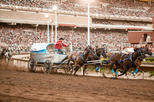 The calgary stampede in calgary 262900