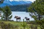 Jasper Wildlife and Waterfalls Tour with Maligne Lake Hike