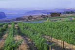 Seattle Shore Excursion: Small-Group Outdoor Adventure and Wine-Tasting Tour, Seattle,
